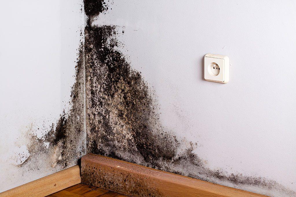 Quitar moho de paredes por condensación