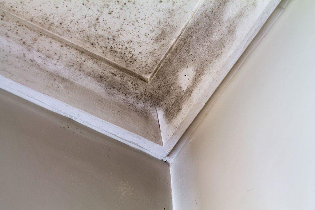 Cómo quitar manchas de humedad en paredes