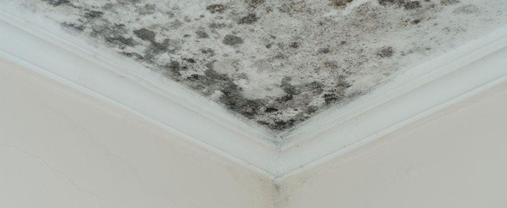 Cómo quitar manchas de humedad en techos