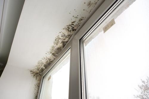 Empresa de humedades en Madrid especializada en condensaciones