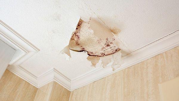 Presupuesto para quitar la humedad de las paredes en Madrid