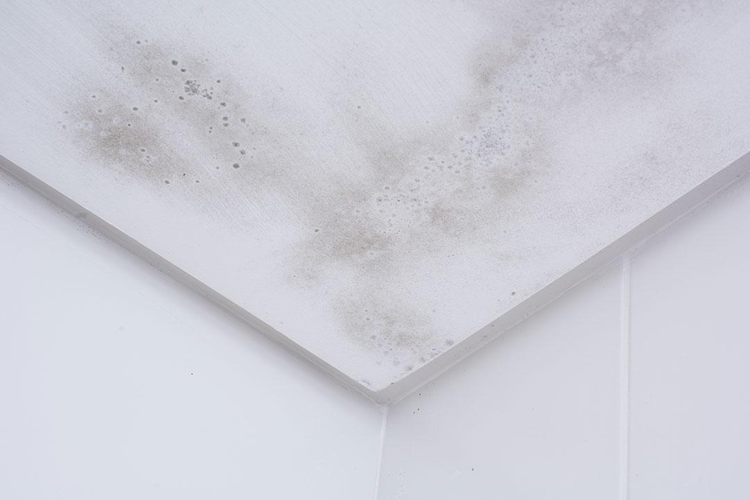 como usar corcho proyectado para humedades