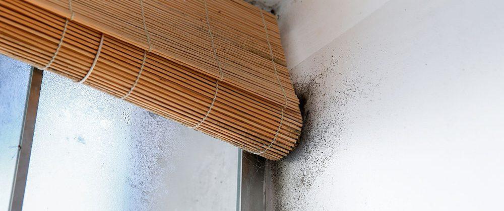 Cómo saber si un piso en Granada tiene humedad