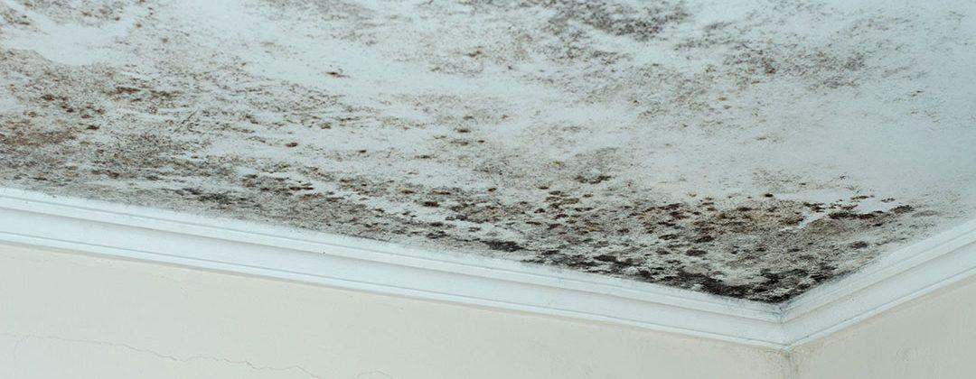 Cómo saber si un piso en Sevilla tiene humedad