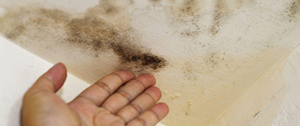 Por qué somos los mejores profesionales de la humedad en Granada por precio