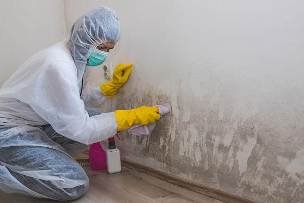 Cómo eliminar el moho de un cuarto