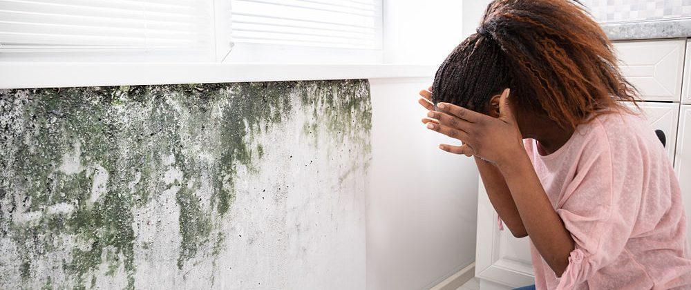 Cómo solucionar problemas de humedad en paredes